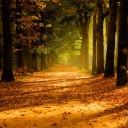 پاییز که میشه…